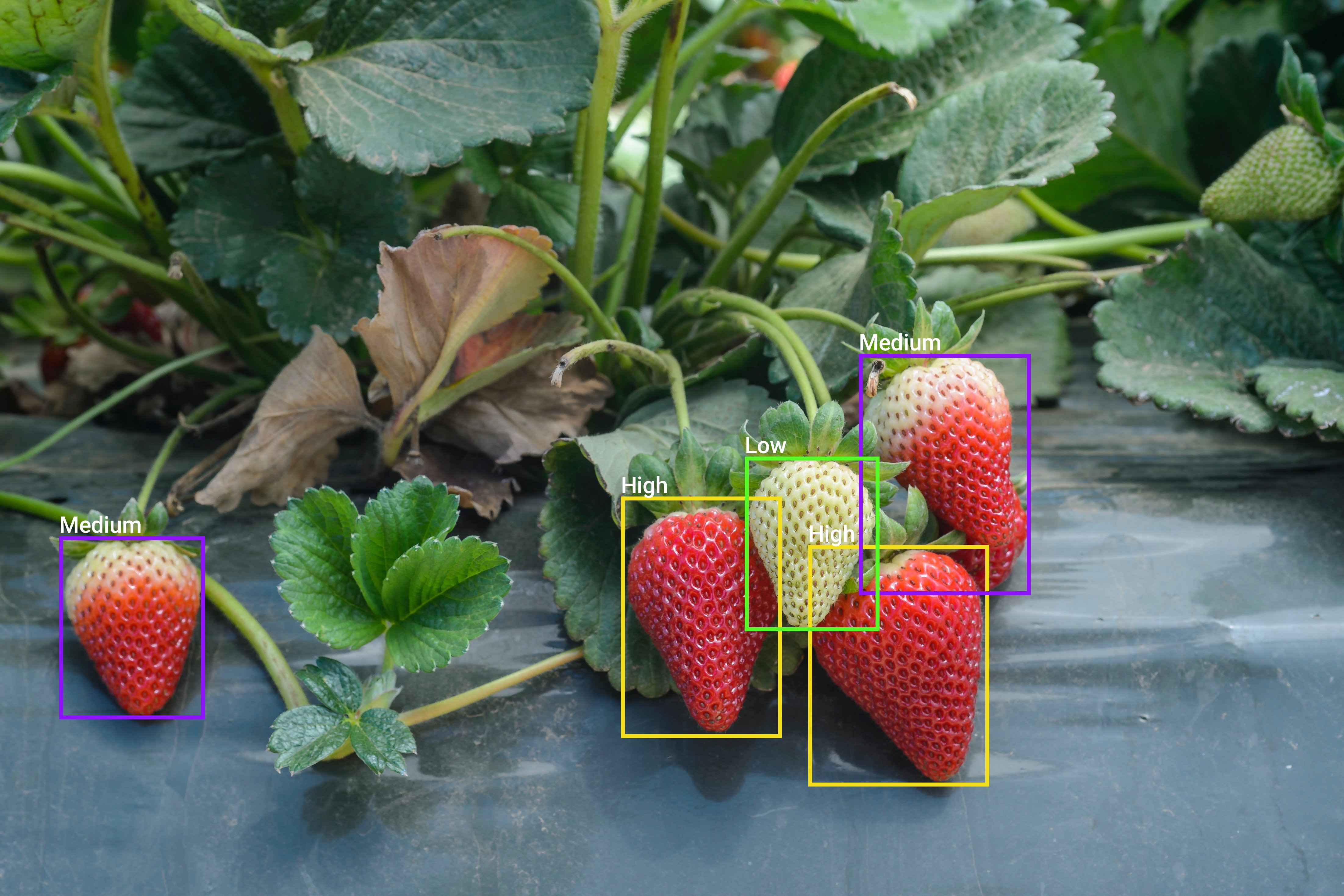 Object Detection and Classification Final iStock-966651884.jpg_done
